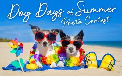 Dogs Days of Summer Photo Contest